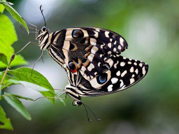 Butterflies (Photography)